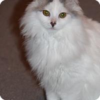 Adopt A Pet :: Zuri - LaGrange, KY
