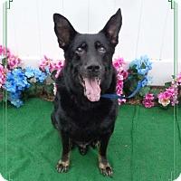 Adopt A Pet :: JOHNNY - Marietta, GA
