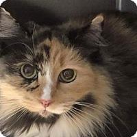 Adopt A Pet :: Mandy Kay - Hockessin, DE