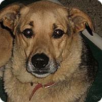 Adopt A Pet :: SHEP - Coudersport, PA