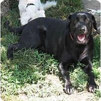 Adopt A Pet :: Maggie - Wahoo, NE