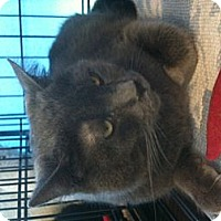 Adopt A Pet :: Pirate - West Dundee, IL