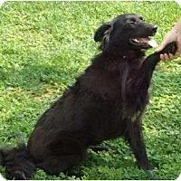 Adopt A Pet :: Abigale - P, ME