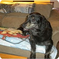 Adopt A Pet :: Maggie - Douglas, MA