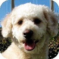 Adopt A Pet :: Dusty - La Costa, CA