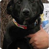 Adopt A Pet :: Carrie - Kingwood, TX
