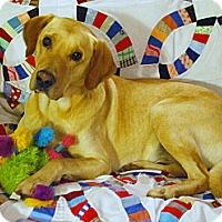 Adopt A Pet :: Sundance - Homewood, AL