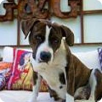 Adopt A Pet :: LYCHEE - Gilbert, AZ