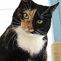 Adopt A Pet :: Clover (Westhampton) - New York, NY