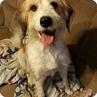 Adopt A Pet :: Avery - Russellville, KY