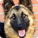 Adopt A Pet :: DAPHNE (video)