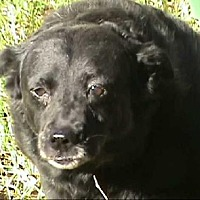 Retriever (Unknown Type) Mix Dog for adoption in Tyler, Texas - A-Moma