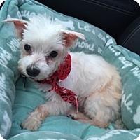 Adopt A Pet :: Sadie - Wilmington, DE