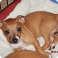 Adopt A Pet :: Paris - Tucson, AZ