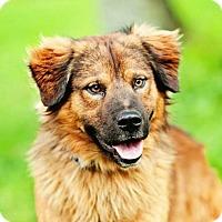 Adopt A Pet :: Roscoe - Brattleboro, VT