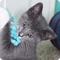 Adopt A Pet :: Joyce - Irvine, CA