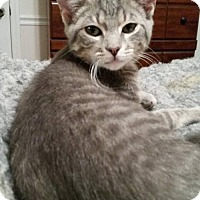 Adopt A Pet :: Chance - Chatham, VA