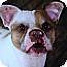 Adopt A Pet :: Jesse James