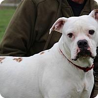 Adopt A Pet :: Ivory - Elyria, OH
