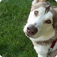 Adopt A Pet :: Demon & Angel - Augusta County, VA