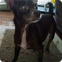 Adopt A Pet :: Schmegal (Peanut) - Richmond, VA