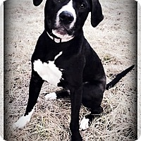 Adopt A Pet :: Harper Lee - Blacklick, OH