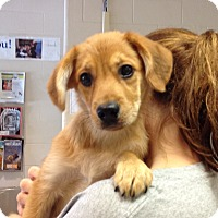 Adopt A Pet :: Jax - Triadelphia, WV