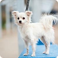 Adopt A Pet :: Tad - Houston, TX