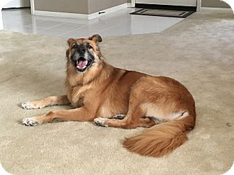 German Shepherd Dog Mix Dog for adoption in La Verne, California - Honeydew