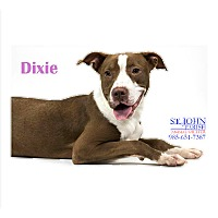 Adopt A Pet :: Dixie - Laplace, LA