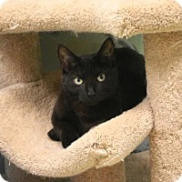 Adopt A Pet :: Little Sweetie - Gloucester, MA