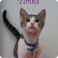 Adopt A Pet :: Tonka - Bradenton, FL