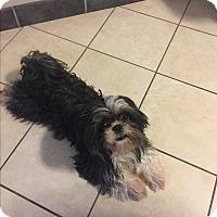 Adopt A Pet :: Fiona - Union Grove, WI