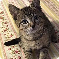 Adopt A Pet :: Mulder - Gainesville, FL