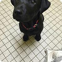 Adopt A Pet :: Coffee Bean - Marietta, GA