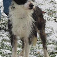 Adopt A Pet :: Buddy - Elkins, WV