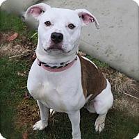 Adopt A Pet :: Lee - Brookhaven, NY