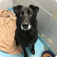 Adopt A Pet :: Vinny - Chicago Heights, IL