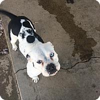 Adopt A Pet :: Charlotte - Hesperia, CA