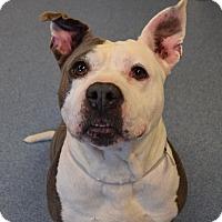 Adopt A Pet :: Marla - Bay Shore, NY
