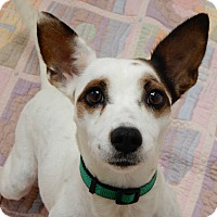Adopt A Pet :: Noelle - Long Beach, NY