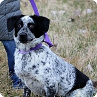 Adopt A Pet :: Georgette - Liberty Center, OH