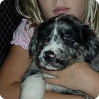 Adopt A Pet :: Hermes - Richmond, VA