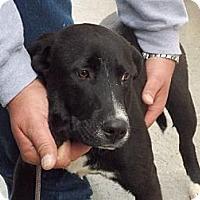Adopt A Pet :: BEN - Dallas, NC