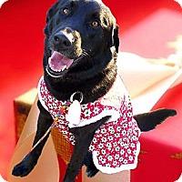 Adopt A Pet :: Zelda mellow easy gal - Sacramento, CA