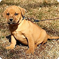 Adopt A Pet :: Bodie - Brattleboro, VT