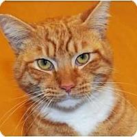 Adopt A Pet :: Squirrelly - Monroe, GA