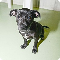 Adopt A Pet :: Baxter - New York, NY