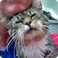 Adopt A Pet :: Walter - Centralia, WA