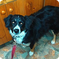 Adopt A Pet :: Tinkerbell - Elk River, MN